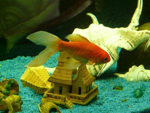 金魚水槽のレイアウト