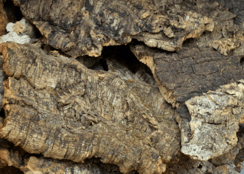コルク樹皮