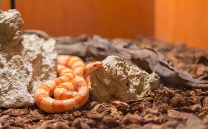 爬虫類の種類
