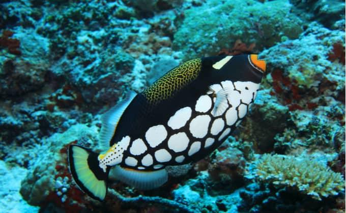 海水魚の飼育