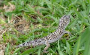 初心者向け、ペットにおすすめの爬虫類を紹介!トカゲ・ヤモリ・ヘビ・カメの人気の種類は?