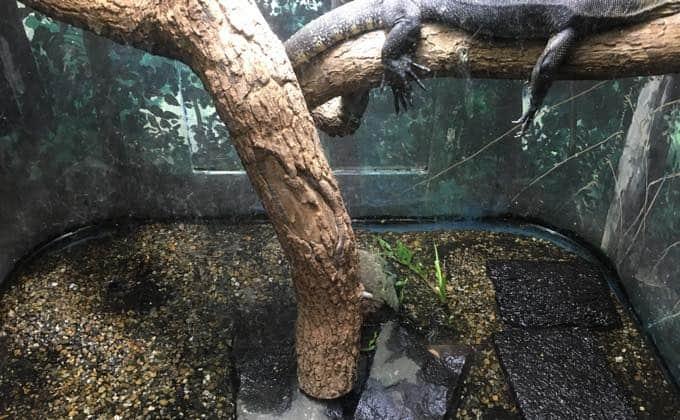 ミズオオトカゲの飼育