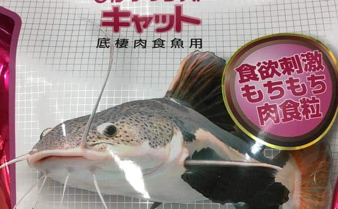 人工餌 キャット