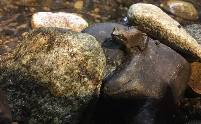 カエルの飼育方法を紹介!ペットとして飼育しやすい種類や飼育の注意点は?