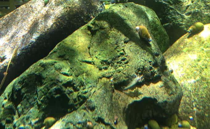 ミナミヌマエビの水温