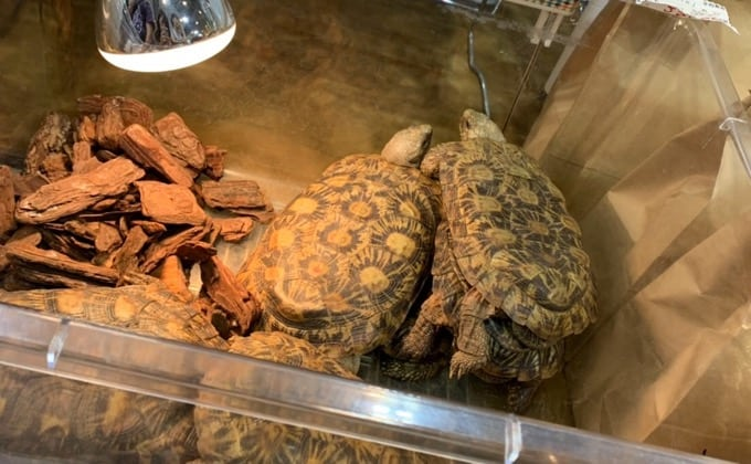 爬虫類の飼育で大切なバスキングライトと紫外線ライトを紹介!爬虫類別のおすすめ商品は?